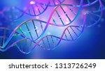 dna. study of gene structure of ... | Shutterstock . vector #1313726249