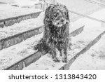 black yard dog  with shaggy... | Shutterstock . vector #1313843420