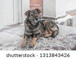 black yard dog  with shaggy... | Shutterstock . vector #1313843426