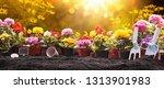 garden flowers  plants and... | Shutterstock . vector #1313901983
