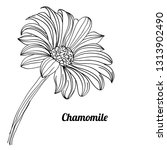 hand drawn chamomile with lines....   Shutterstock .eps vector #1313902490