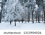 snow covered pine tree forest... | Shutterstock . vector #1313904026