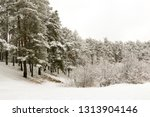 snow covered pine tree forest... | Shutterstock . vector #1313904146