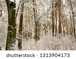 snow covered pine tree forest... | Shutterstock . vector #1313904173