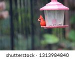 red male northern cardinal... | Shutterstock . vector #1313984840