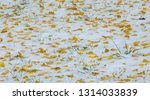 the first snow  late autumn ... | Shutterstock . vector #1314033839