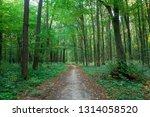 beautiful green forest in summer | Shutterstock . vector #1314058520