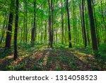 beautiful green forest | Shutterstock . vector #1314058523