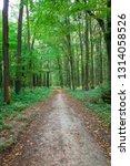 beautiful green forest in summer | Shutterstock . vector #1314058526