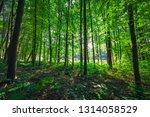 beautiful green forest | Shutterstock . vector #1314058529