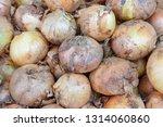 properties onion  onion  high...