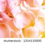 rose petals background | Shutterstock . vector #1314110000