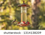 A Hummingbird Flying Backwards...