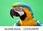 macaw bird | Shutterstock . vector #131414690