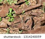 animal disguise. brown lizard... | Shutterstock . vector #1314240059