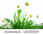 Springflowers Isolated On Whit...