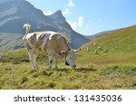 cows in an alpine meadow.... | Shutterstock . vector #131435036