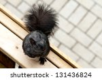 Black Squirrel On Top Of A...