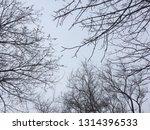 bare trees against gray winter... | Shutterstock . vector #1314396533