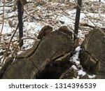 old tree stump. winter nature | Shutterstock . vector #1314396539