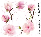 flowers and buds magnolia.... | Shutterstock .eps vector #1314455870