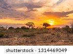 scenic kruger landscape at... | Shutterstock . vector #1314469049
