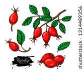 rosehip vector drawing set..... | Shutterstock .eps vector #1314489356