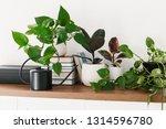 different houseplants  pile of... | Shutterstock . vector #1314596780