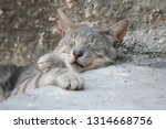 Close Up  Cute Grey Cat With...