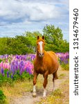 horse on the colorful and... | Shutterstock . vector #1314679460