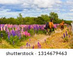 horse on the colorful and... | Shutterstock . vector #1314679463