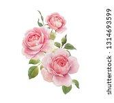 watercolor floral illustration... | Shutterstock . vector #1314693599