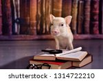 little piggy on the background... | Shutterstock . vector #1314722210