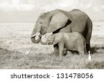 Stock photo elephant with baby in amboseli national park 131478056