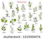 wild meadow herbs and grasses.... | Shutterstock .eps vector #1315006076