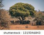 herd fo african elephants under ... | Shutterstock . vector #1315046843