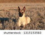 portrait of a beautiful dog...   Shutterstock . vector #1315153583