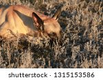 portrait of a beautiful dog...   Shutterstock . vector #1315153586