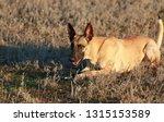 portrait of a beautiful dog...   Shutterstock . vector #1315153589