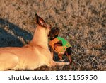 big and small dogs breed...   Shutterstock . vector #1315155950