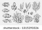 set of sea fish and plants  ... | Shutterstock .eps vector #1315293326