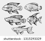 sketch of exotic fish. hand... | Shutterstock .eps vector #1315293329