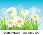 fresh spring juicy chamomile... | Shutterstock .eps vector #1315382129