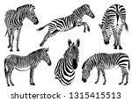 Graphical Set Of Zebras...