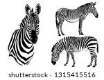 graphical set of zebras... | Shutterstock .eps vector #1315415516