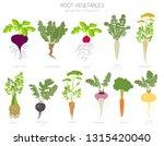 root vegetables raphanus ... | Shutterstock .eps vector #1315420040