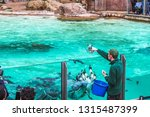 zoo keeper feed the penguins... | Shutterstock . vector #1315487399