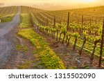 vineyards landscape at sunrise... | Shutterstock . vector #1315502090