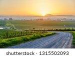 vineyards landscape at sunrise... | Shutterstock . vector #1315502093