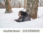 shaggy big dog lying on the... | Shutterstock . vector #1315530020